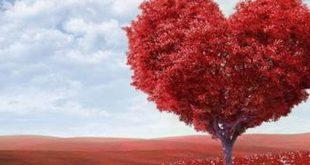 Tarot para el amor