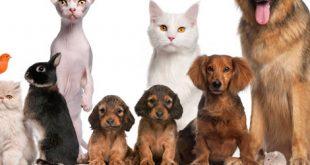 Hechizo de protección para mascotas